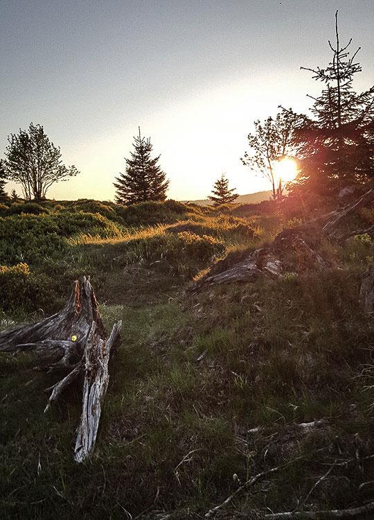 Sonnenberg-Sankt-Andreasberg-Harz - Wiese im Sonnenuntergang