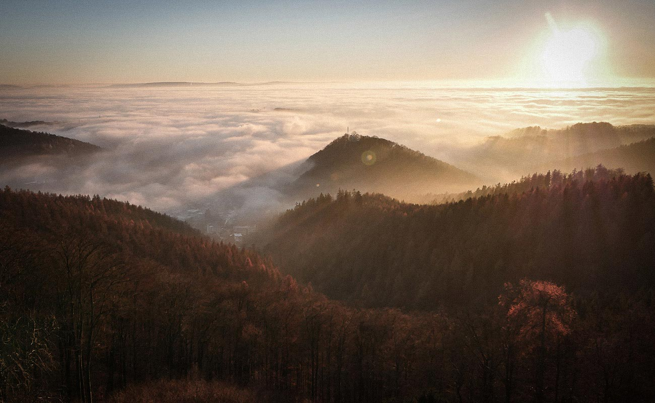 Südharz im Nebel