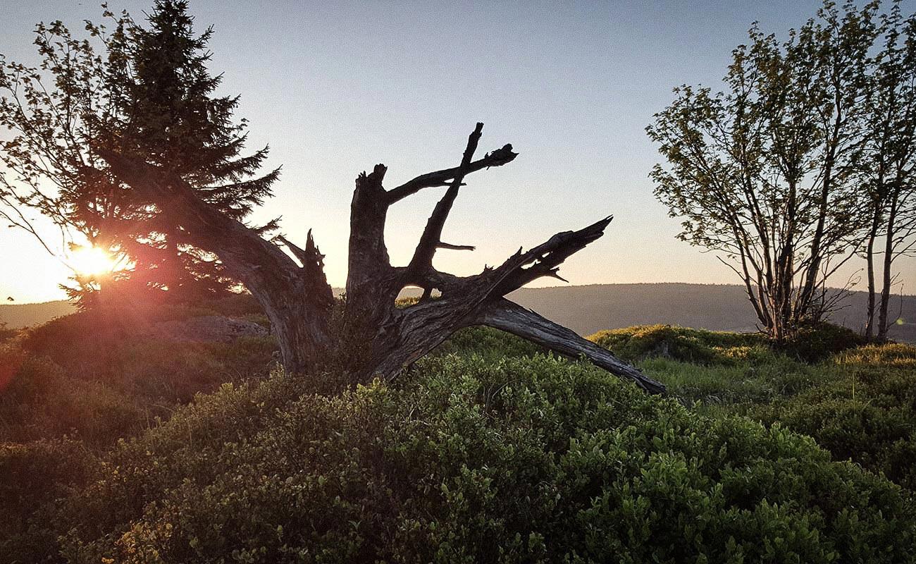 Sonnenberg-Sankt-Andreasberg-Sonnenuntergang